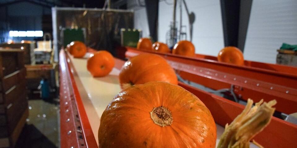 I den nya hallen tvättas, torkas och förvaras pumporna som sedan ska vidare ut i Sverige, Danmark och Finland.