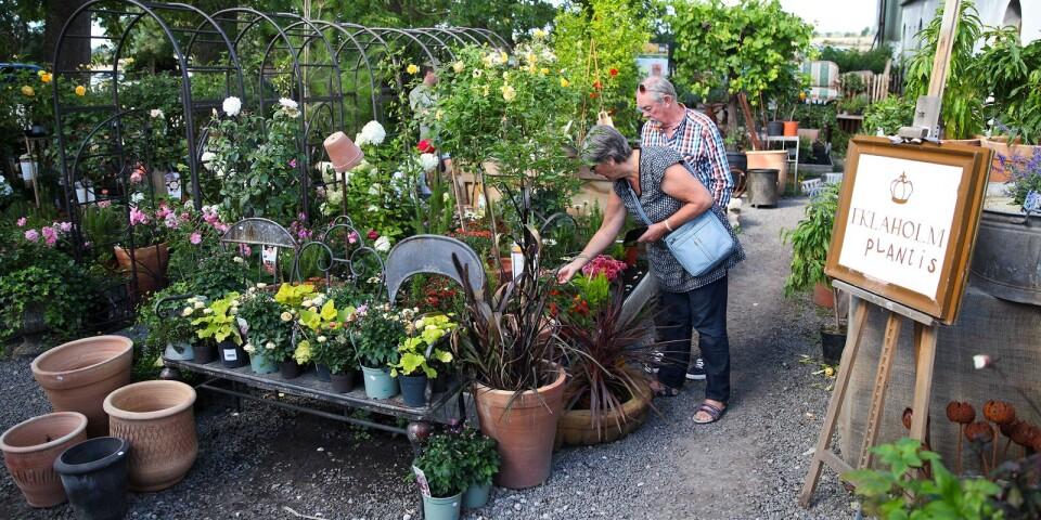 Försäljningen av växter, möbler och heminredning sköt i taket under juli då omsättningen ökade 350 procent jämfört med i fjol.
