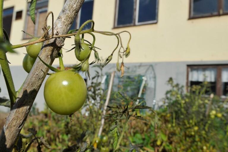 Trots sanering: Skyltarna är kvar och en tomatodling har dykt upp