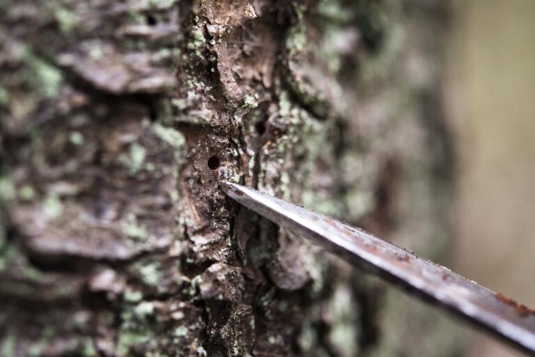 Skogen och viruset