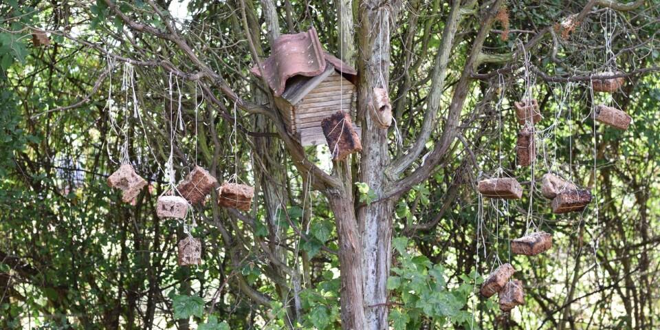 När det blir bröd över hänger Marianne upp det i ett träd som hon har som fågelmatare. Trädet blir mer populärt på vintern, berättar hon. På sommaren finns det annat att äta för fåglarna.