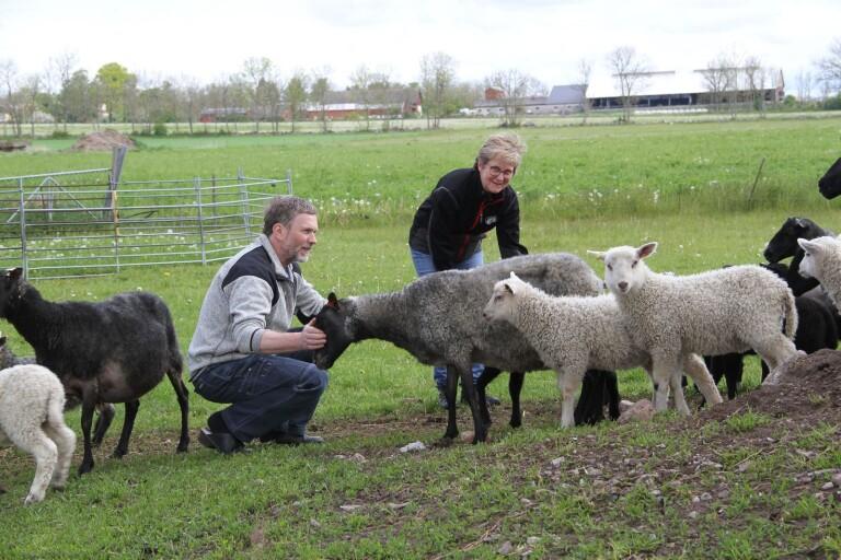 Gårdsbutik, lantbruk och många djur i Runsten