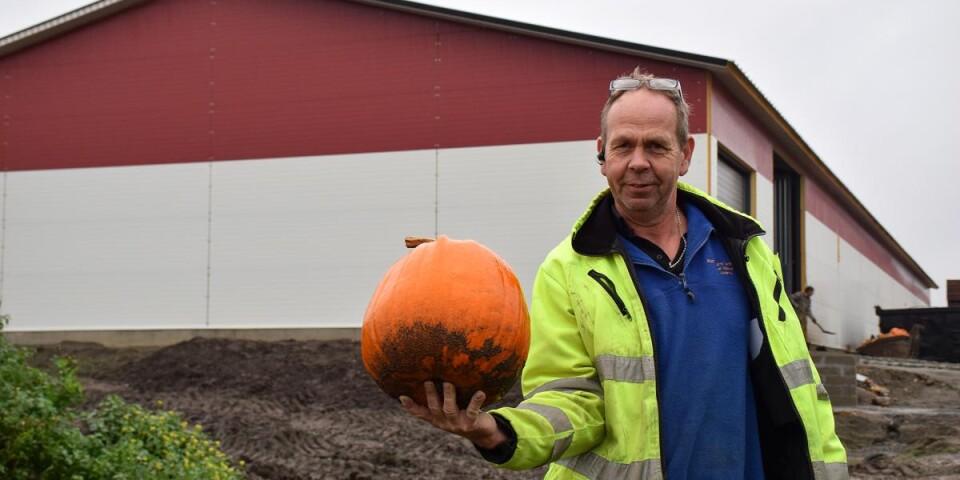 Leif Nilsson driver Boställets grönsaker i Löderup, och är en av Sveriges största pumpaodlare.