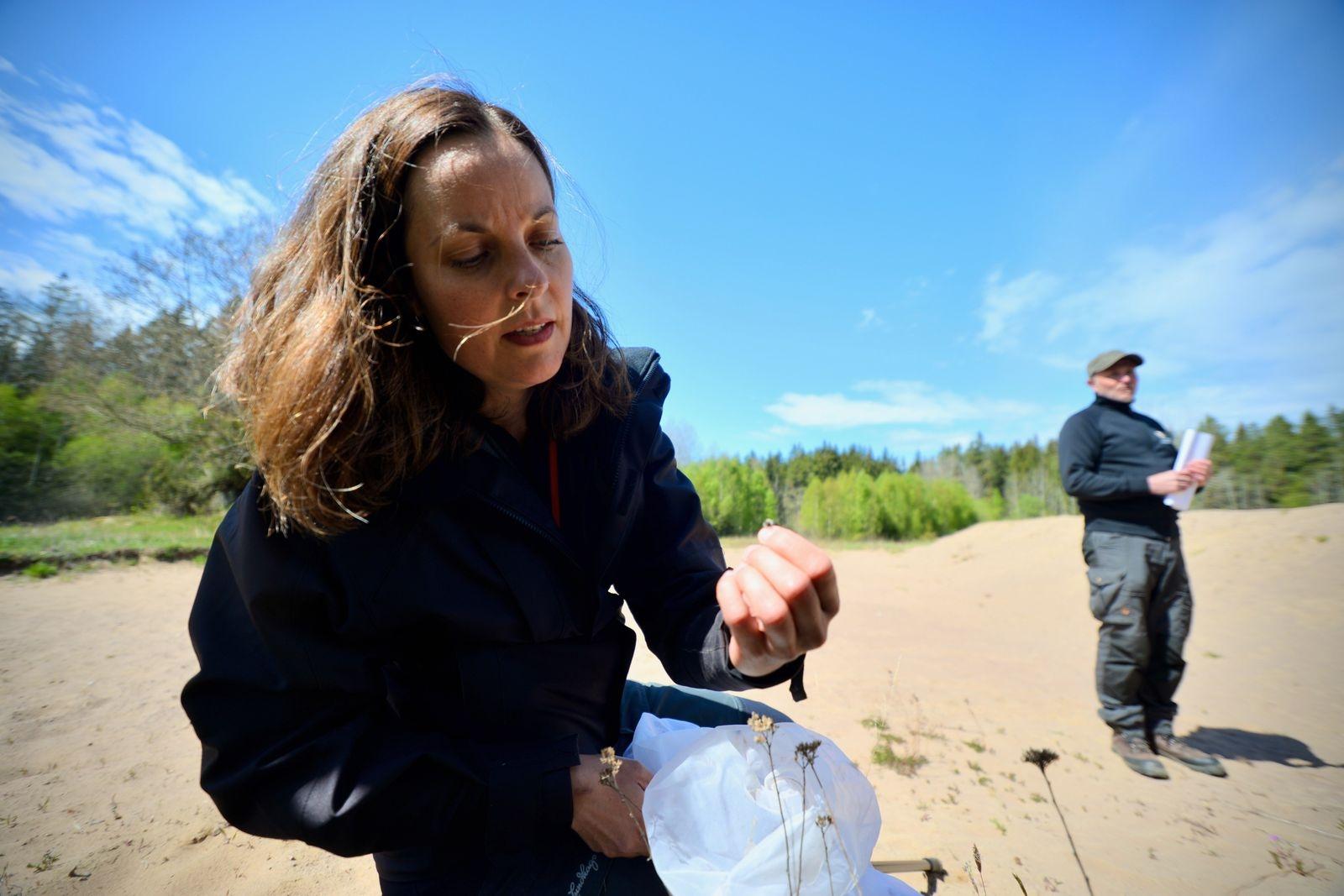 Projekt vill gynna hotade arter av vilda bin