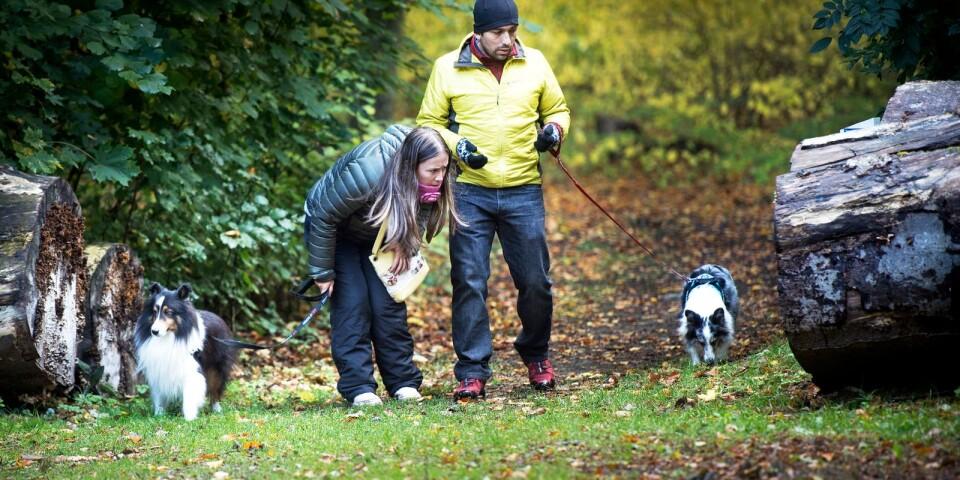 Yury López och hennes make Javier Vega sökte med sina andra hundar Azul och Fito efter Leela senast under söndagen.