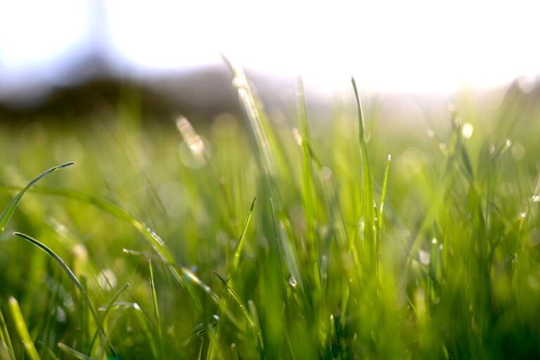 Tomtkön växer lavinartat – men här finns många lediga