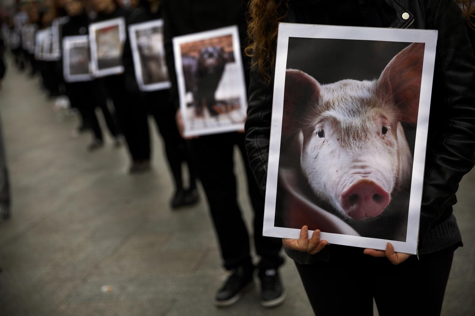 Skydda bönderna mot aggressiva djurrättsaktivister