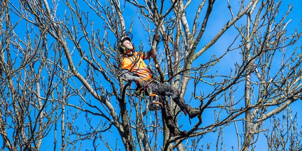 Arboristyrket är tufft både psykiskt och fysiskt.