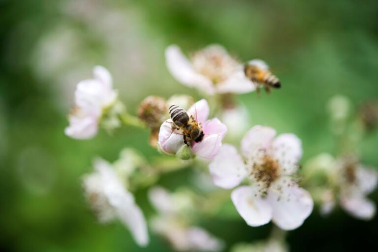 Det är viktigt att ge bina rätt förutsättningar, tycker Karl-Erik Olofsson.