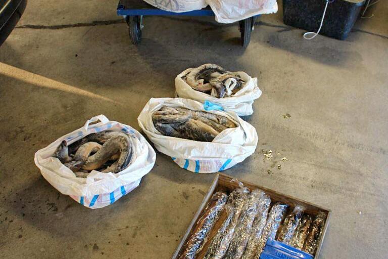 Åtalade efter tjuvfiske hade lämnat landet