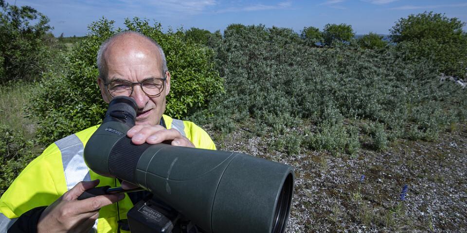 """På spaning efter de fåglar som flytt. """"Vi är uppriktigt sagt lite bekymrade"""", säger Hans Ohrt, miljökonsult hos Öresundsbron. En tredjedel av fågelarterna har plötsligt försvunnit från den konstgjorda ön Pepparholm."""