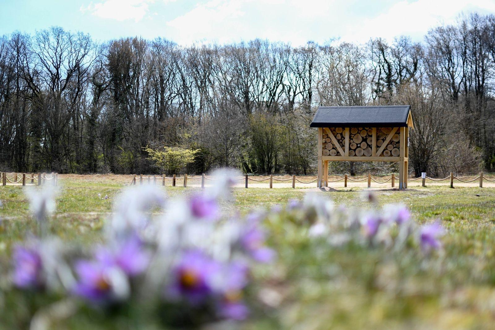 På nationalparkens Naturum satsas det under hela säsongen 2021 på kunskapsspridning om vilda bin och deras behov av föda och bostäder.