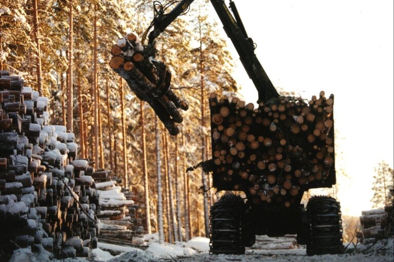 Avverkade skog i naturreservat med kungsörn - företaget döms till böter