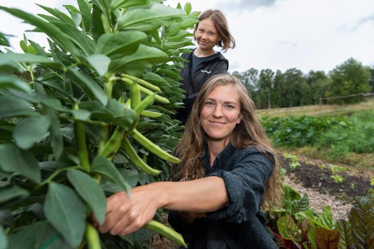 De testar nya odlingsidéer i Växjö
