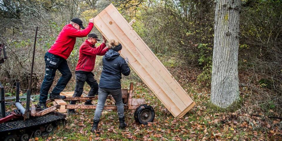 Joel Viefjord och Mattias Hedén från Mattias Mobilsåg och Annika Lydänge från länsstyrelsen hjälps åt med att sätta upp en mulmholk. Den monteras mot en ung ek där den står stabilt.
