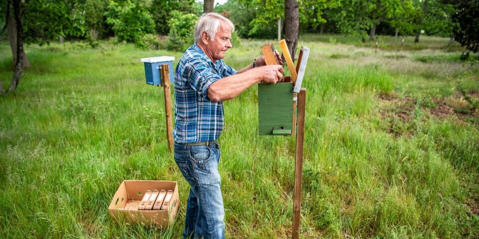 Sven Andersson från Bjärnum har varit biodlare sedan i början på 80-talet. Vartannat år åker han till Blekinge för att få sina drottningar parade.