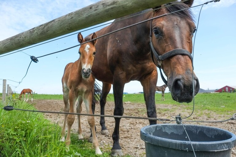 Dags för Hästrundan i helgen