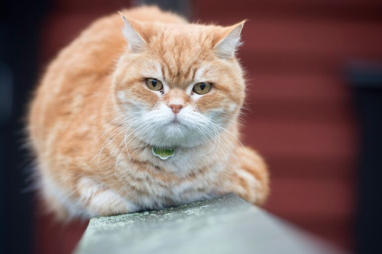 Bistra besked till kvinna med för många katter