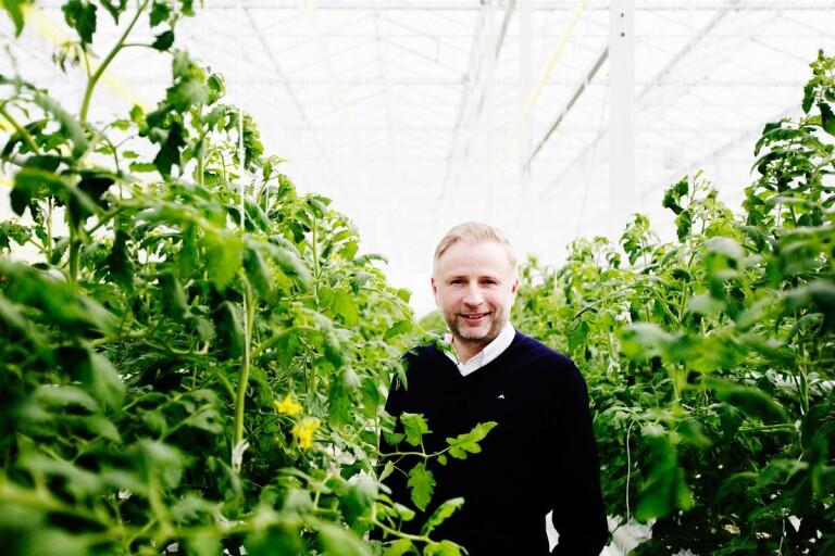 Tomatodlare i Trelleborg kan bli Årets bonde