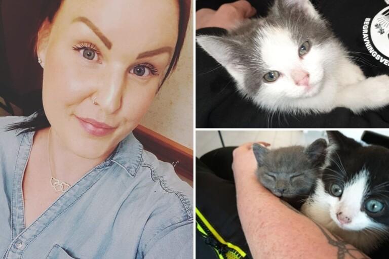"""Hittade dumpade kattungar på kyrkogården: """"Är för jävligt"""""""
