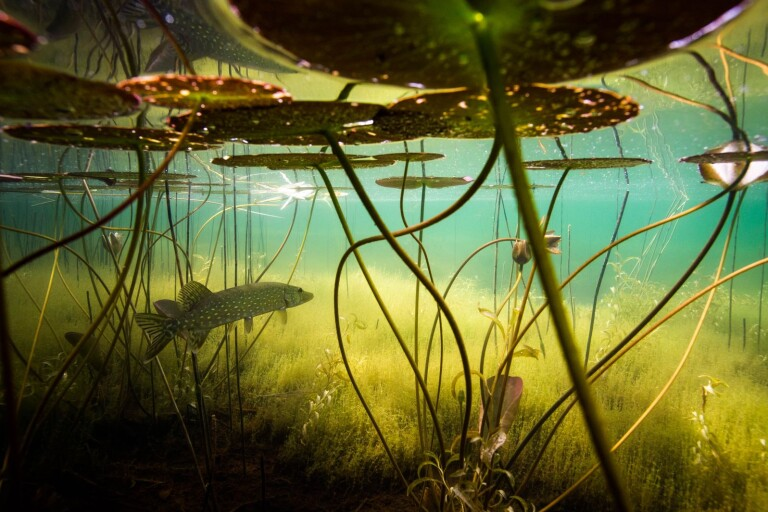 Hammar bjuder in till en resa under vattnet