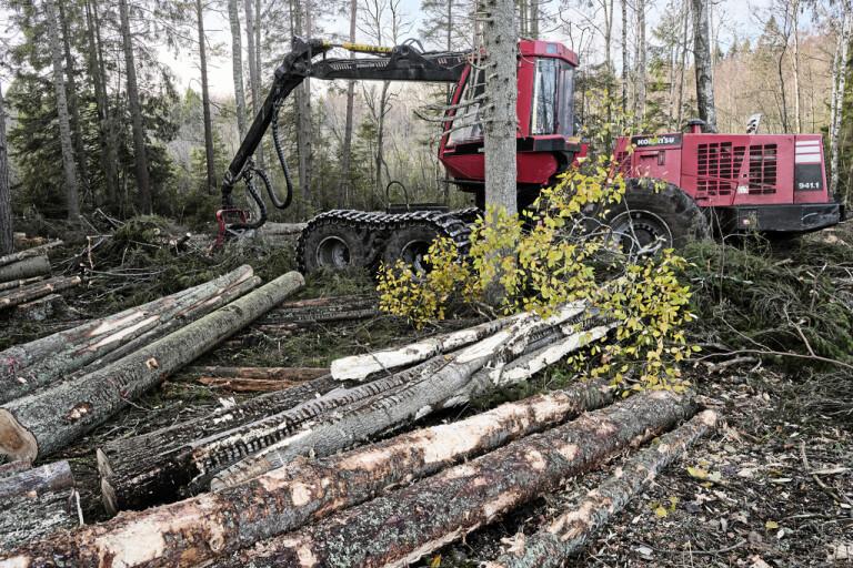 Laddad skogsutredning bäddar för bråk