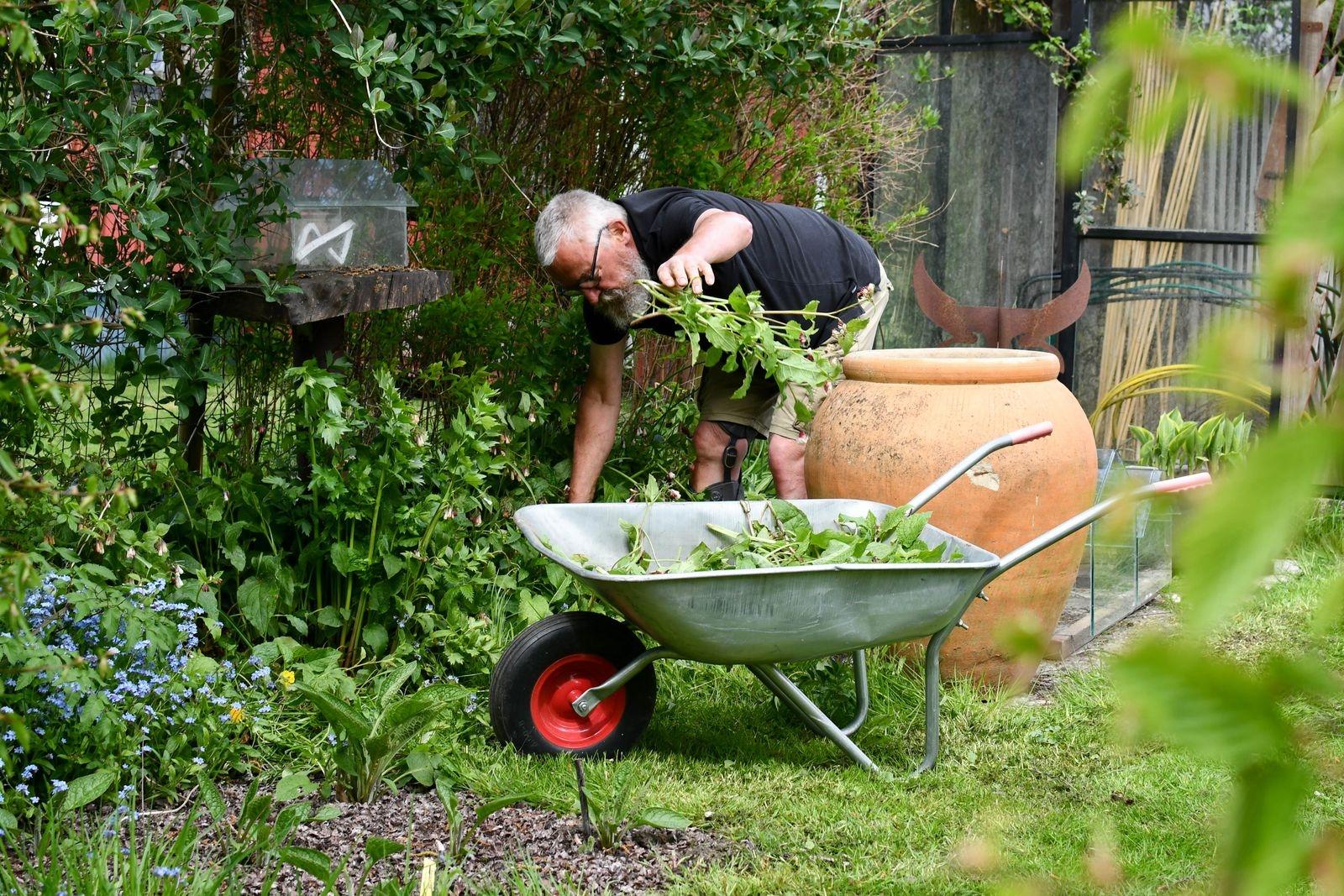 Werner skördar vallört som ska fermenteras och återbördas till trädgården som naturlig gödning.