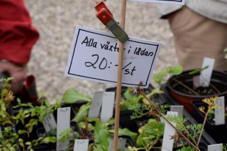 Växtmarknad och visning av lökodlingar