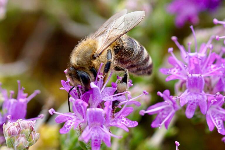 Du kan hjälpa pollinerare genom att odla och plantera växter som de tycker om.