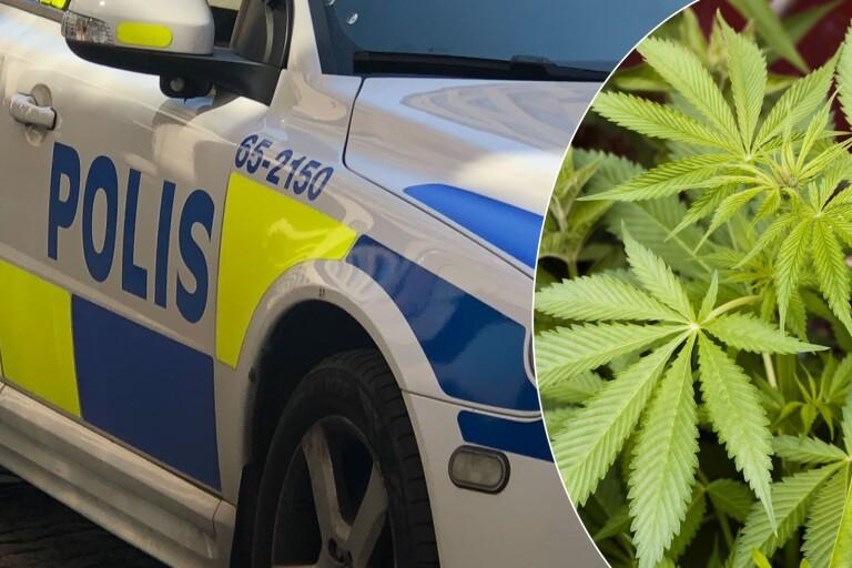 Polis slog till mot cannabisodling – hittade vapen