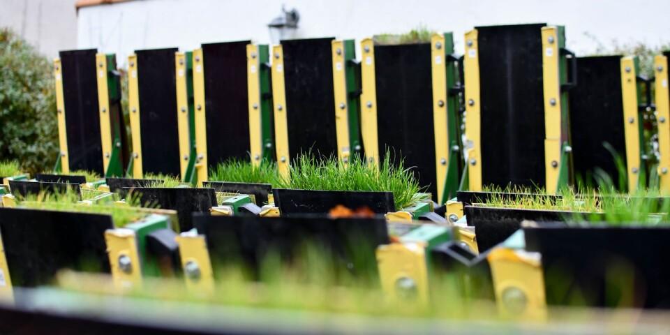 I lådorna på bilden bedrivs testodlingar för att hitta den optimala växtbädden med biokol som jordförbättringsmedel.