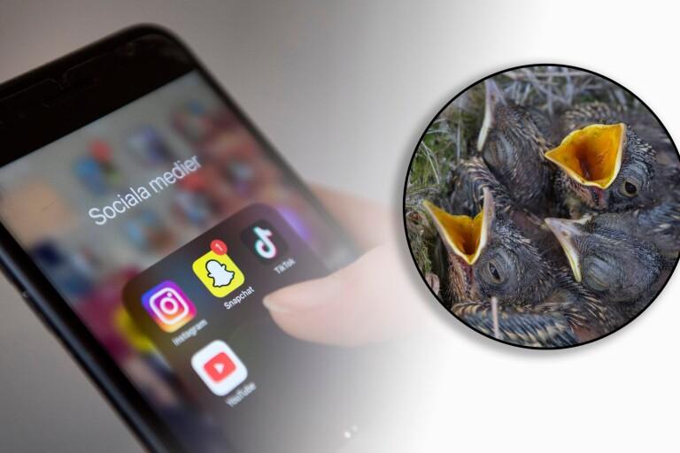 Tonåring skar sakta av huvudet på fågelungar – filmade samtidigt