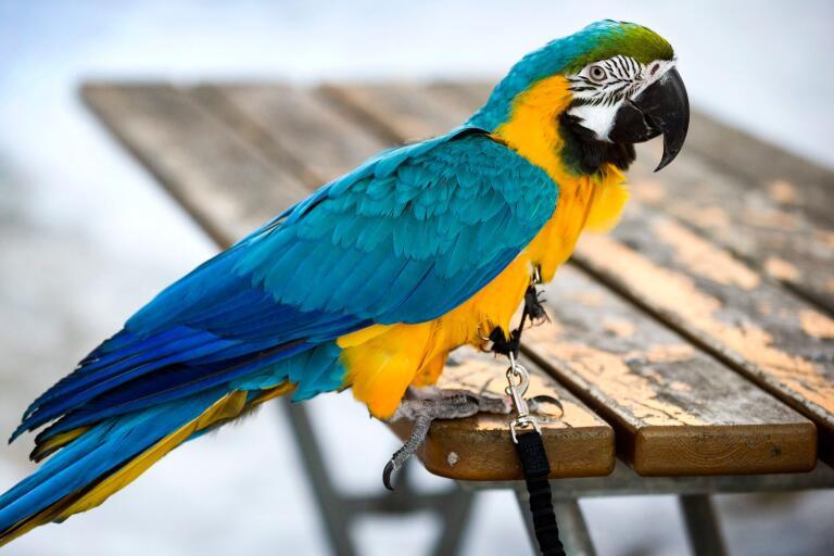 Världen: Åttaåring råkade släppa ut papegojor – slogs ihjäl