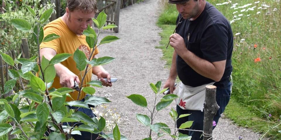 Daniel Wilby och Sam Van Aken hjälps åt att skapa familjeträdet i Den Engelska Trädgården på Svabesholm. Sam Van Aken är i Sverige för att skapa en installation med ympade träd i Malmö. Daniel Wilby är hans medhjälpare under vistelsen och passar på att lära sig mer om hantverket.