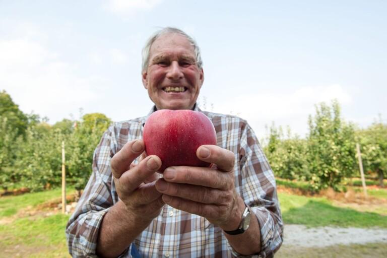 """Nöjda odlare i äppelriket trots vårfrost:""""Bättre än jag trodde"""""""