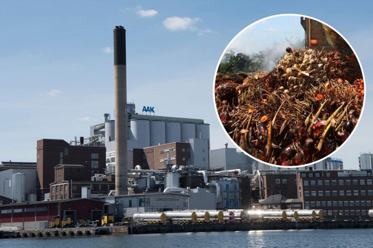 Granskning: AAK handlar med illegal palmolja