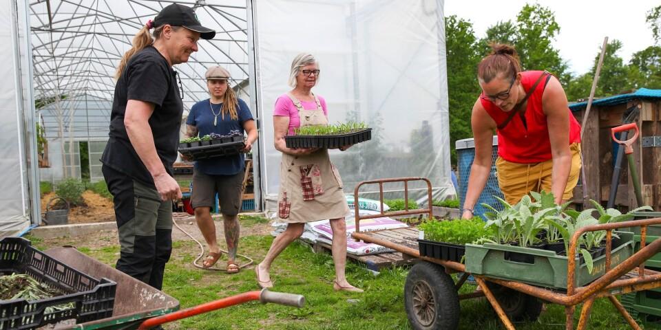 Gun Persson, Angelika Jakimowicz, Helen Möller och Elna Jolom är på jakt efter fler lokala producenter som vill ingå i den nystartade REKO-ringen i Norra Björstorp.