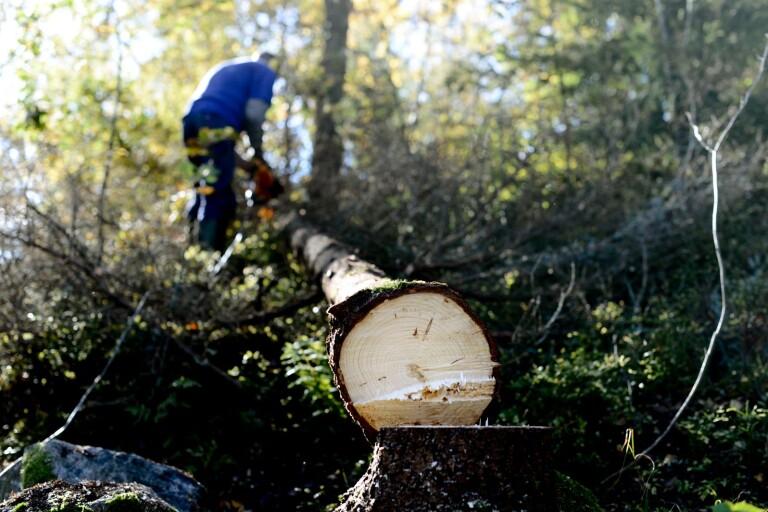 Osakligt angrepp på skogsägare