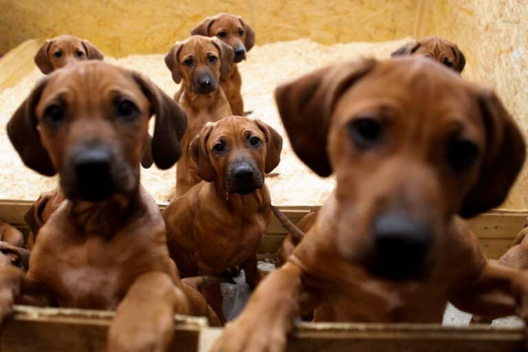 Hund fick valpar – ägaren måste betala 75 000