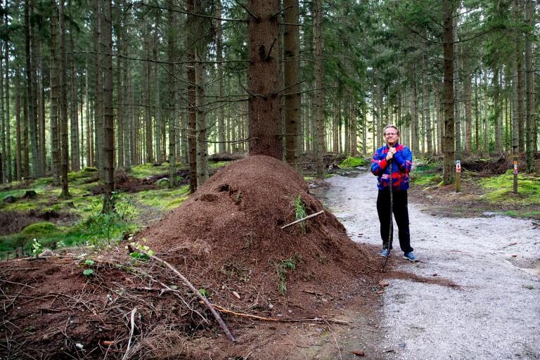 Pertti Lindholm hajade till när han fick syn på myrstacken i Halens naturreservat. Nu ställer han sig frågan, kan det vara Blekinges största.