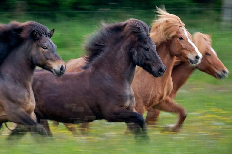 Trio tog sig in i hästhagen mitt i natten – Stefan tog upp jakten
