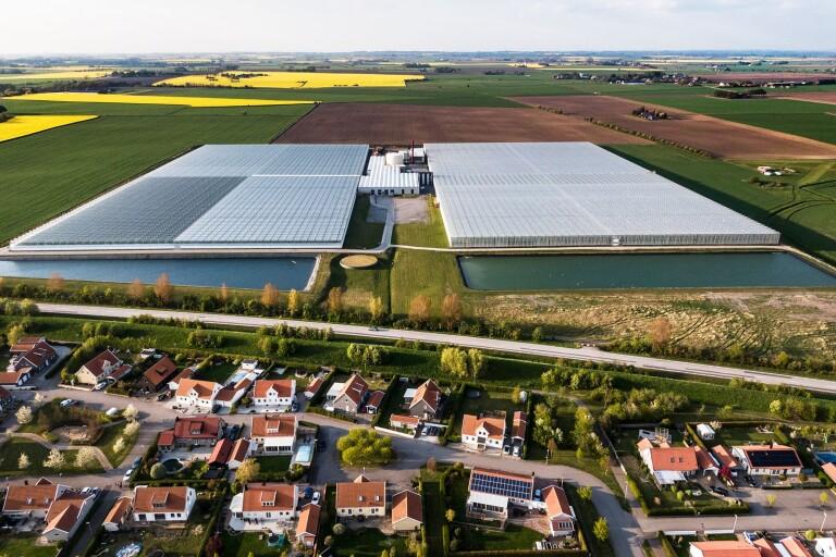 Tomatodlingen i Trelleborg vill bygga ut – rejält