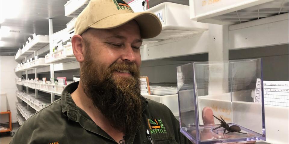 Kane Christensen är spindelansvarig på Australian Reptile Park, norr om Sydney.