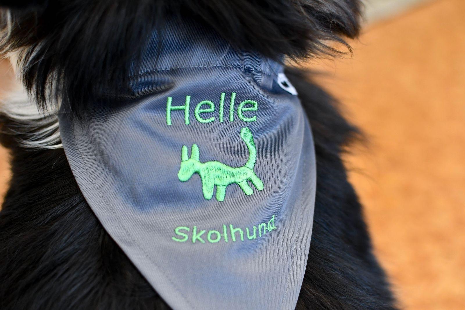 Helle med sin nya scarf som visar att hon är diplomerad skolhund vid Hundens hus i Sundsvall.