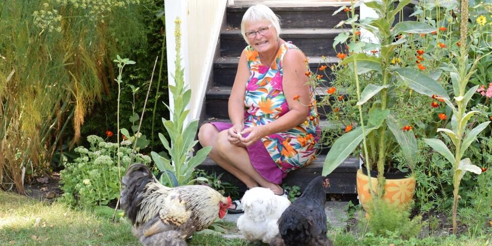 Marianne har, förutom Loffe, Ellen och Ann-Marie, även hönan Lissie. Vid besöket på Sandås Trädgård Öland låg Lissie och ruvade och var inte lika sugen på att fotograferas som de andra.