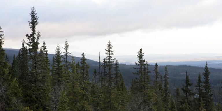 Skogen svartmålas av de gröna