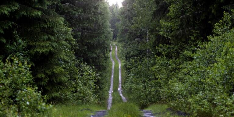 EU:s förslag hotar svenskt skogsbruk