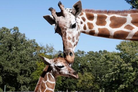 """""""De mest älskade djuren är allvarligt utrotningshotade."""""""
