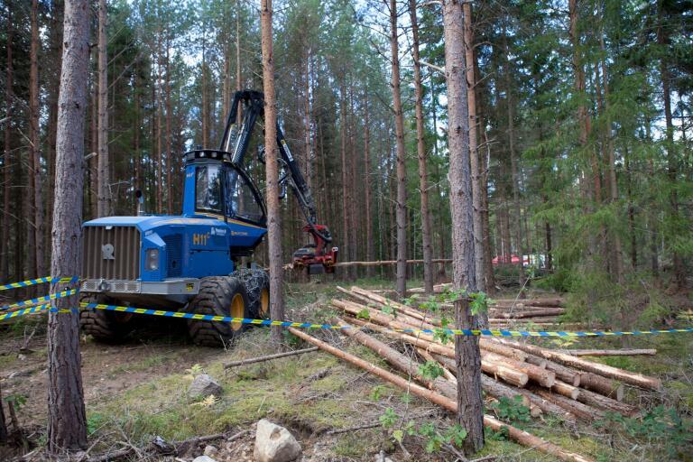 Under dagen kan man bland annat se skogsmaskiner i arbete i skogen. Bilden är från skog- och miljödagen 2016.