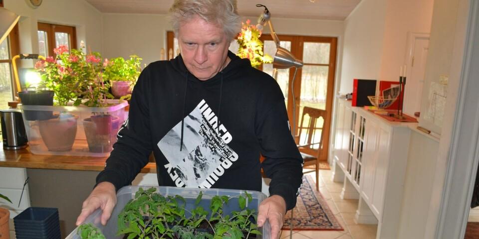 Tomatodlaren Arne Cesar visar sin vårsådd. Den publika trädgården var frukten av genuint odlarintresse.